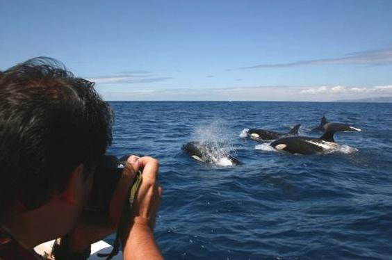 avistamiento-cetaceos